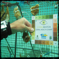 Become PADI Coral Watch Diver with Coral Point
